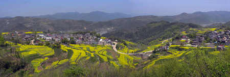Ninghai rape flower field