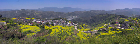 rape flower Mountain village scenery