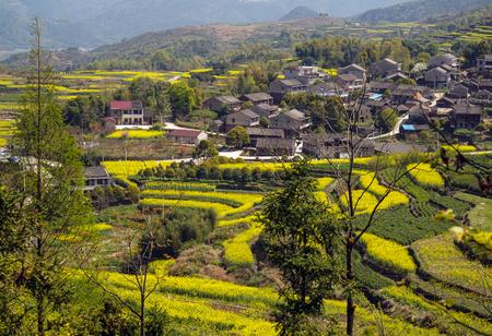 Village rape flower field Фото со стока