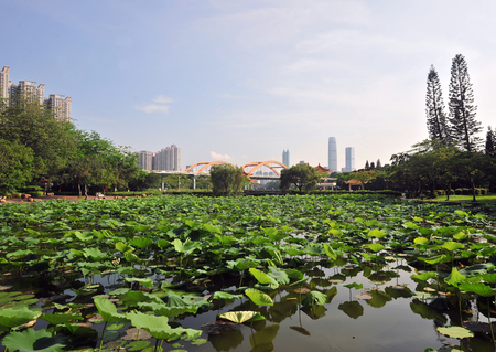 lotus pond at park