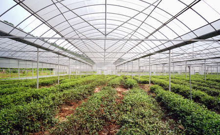Dendrobium planting greenhouse