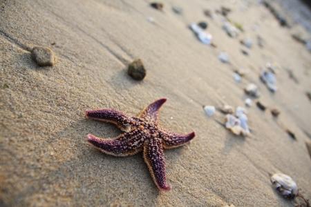 starfish: Stella di mare Archivio Fotografico