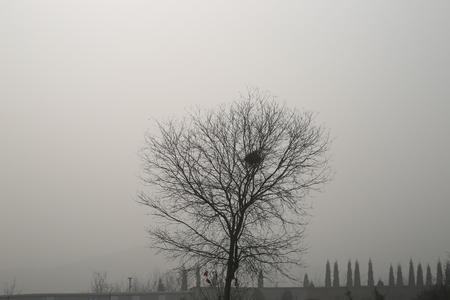 nido de pajaros: Los �rboles y el nido de p�jaro Foto de archivo