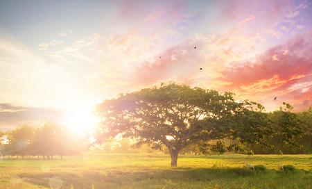 Naturhintergrundkonzept: Alleinbaum auf Wiesensonnenuntergang.