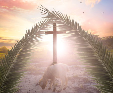 A lamb on the background of the cross sunset Stock Photo