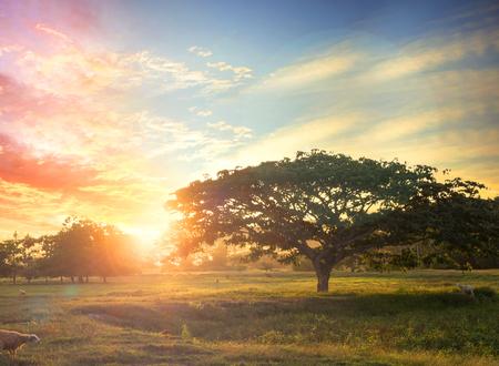 Ora del tramonto sulla montagna con grande albero e uccelli