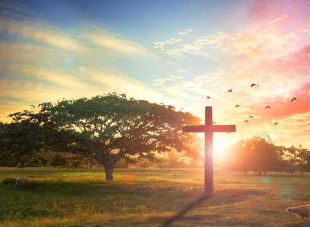 Jesus christ mercy at cross on mountain sunset background