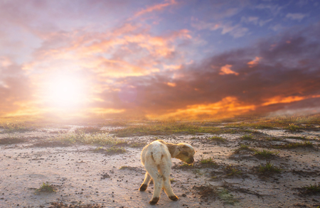 Bible Story Concept: Lost goat