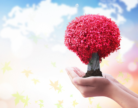 hands holding red big tree on blurred nature background