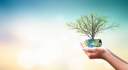 International Day of Charity concept: Human hands holding growth tree on green nature background