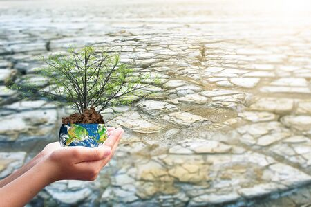 Earth Day concept: hand holding earth globe and tree over blurred nature background