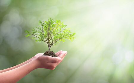 International Day of Forests Forests concept: hand holdig big tree growing on natural background