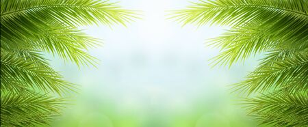 Earth day concept: green palm tree leaves on natural sky