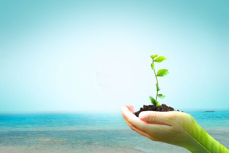World Environment Day concept: hand holding plant on Oceans background