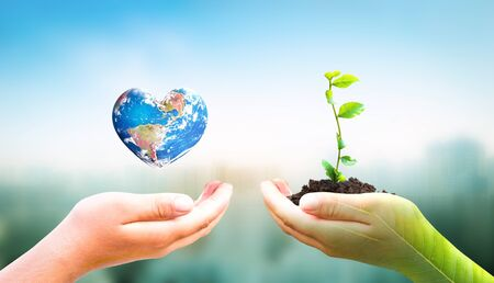 World Environment Day concept: hand holding tree planting and earth on green nature background 免版税图像
