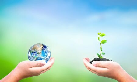 World Environment Day concept: hand holding tree planting and earth on green nature background.