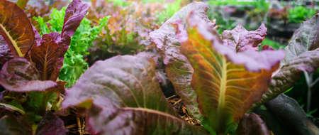 Healthy food concept: organic vegetable closeup 스톡 콘텐츠