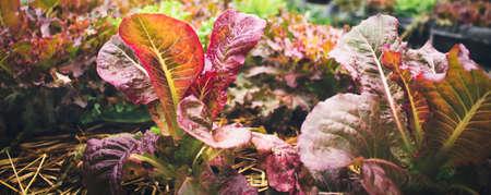 Healthy food concept: organic vegetable closeup 免版税图像
