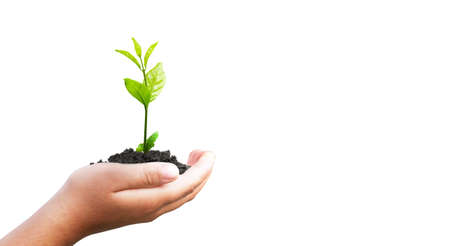 World environment day concept: hand holding small plant isolated on white background 스톡 콘텐츠