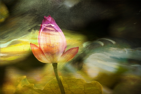 Lotus painting background