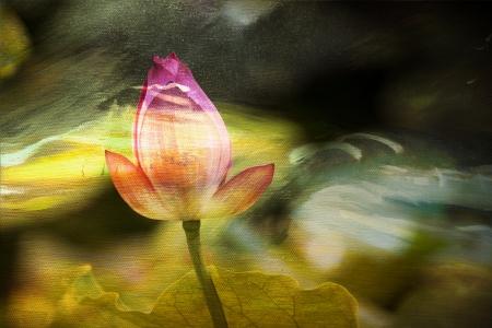 landscape painting: Lotus painting background