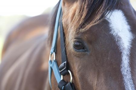 black hair blue eyes: The horses eyes