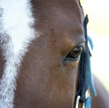 brown hair blue eyes: The horses eyes