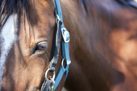 head close up: The horses eyes
