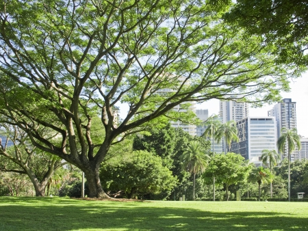 Brisbane park landscape photo