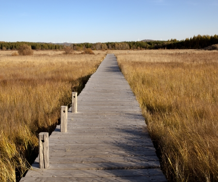 wooden footbridge across the wetland against a blue sky at autum Stock Photo - 16590021