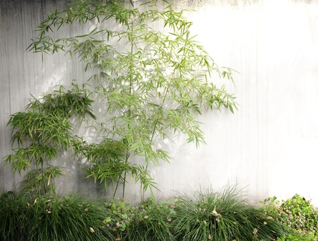 bamboo forest: Gardening, bamboo
