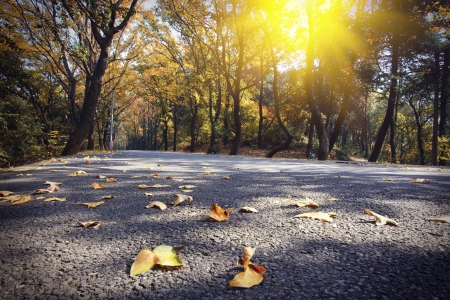 Autumn highway photo