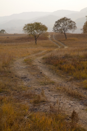 Dirt road on the prairie autumn  photo