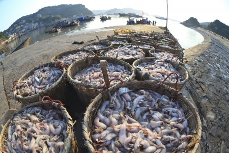 Fisheries harvest photo