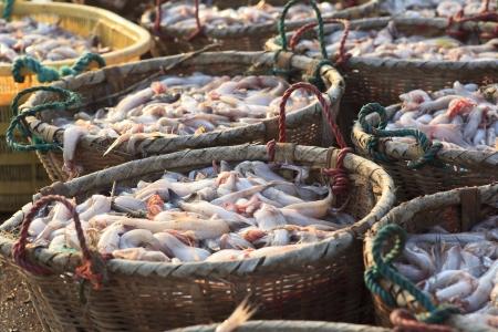 fischerei: Fischerei ernten