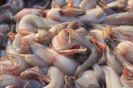 fisheries: Fisheries harvest