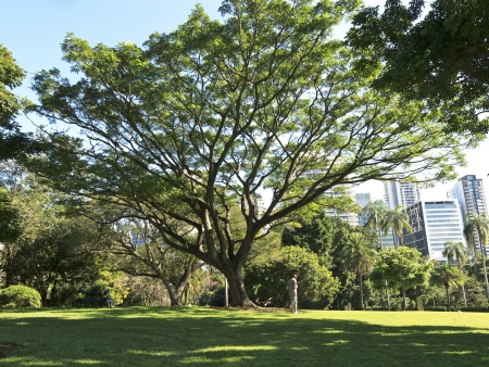 Brisbane City Park photo