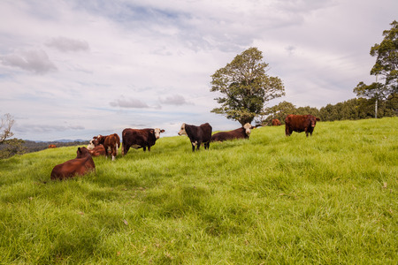 Queensland cattle ranch Stock Photo