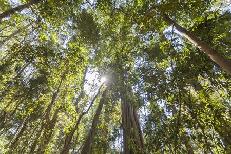 cairns: Cairns Rainforest