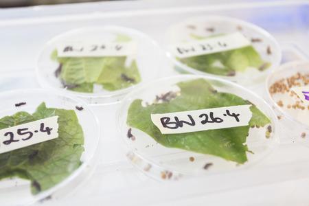 silkworm: Sample silkworm Stock Photo