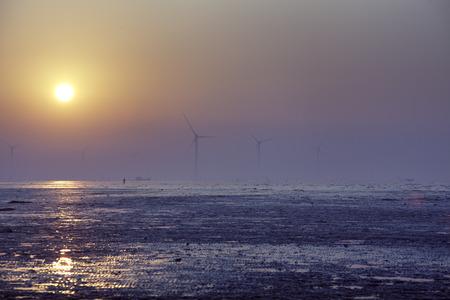 wetland: Seaside wind power