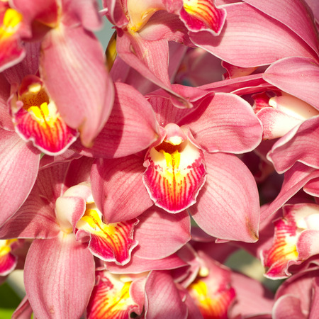 red orchid: Red orchid
