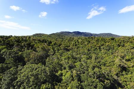 queensland: Virgin forest in Queensland, Australia