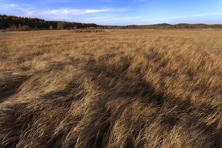 hebei: China Hebei autumn prairie