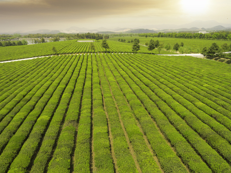 China's Jiangsu, rural tea plantations 版權商用圖片 - 79751935