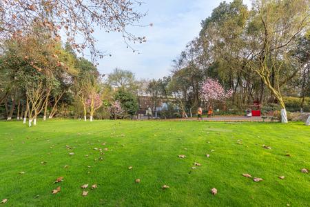 Chinas Chengdu Park lawn, beautiful city park landscape