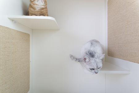 Indoor cattery, cats in the game