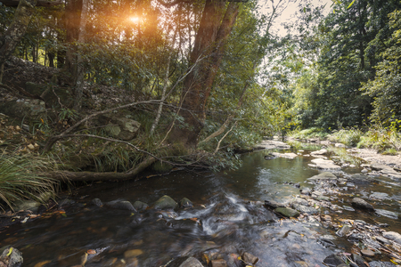 Stream environment in natural parks, Queensland, Australia Archivio Fotografico - 103596581
