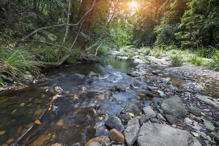 Ambiente di ruscello nei parchi naturali, Queensland, Australia Archivio Fotografico - 103596582