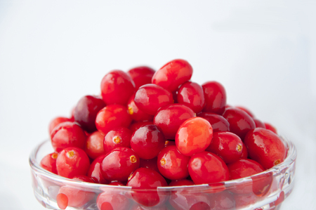 Mainly growing northern hemisphere fruit, red berry cranberry 스톡 콘텐츠